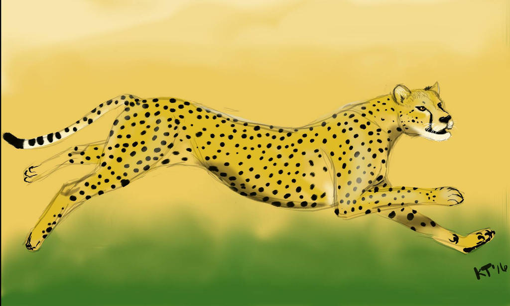 Speedpaint: Cheetah by Filly8
