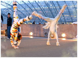 Acrobatic cat by Rollwurst