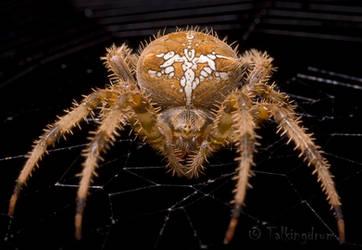 Spider by Talkingdrum