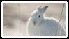 arctic bunny by bunsona