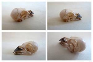 Sparrow Skull by IckyDog