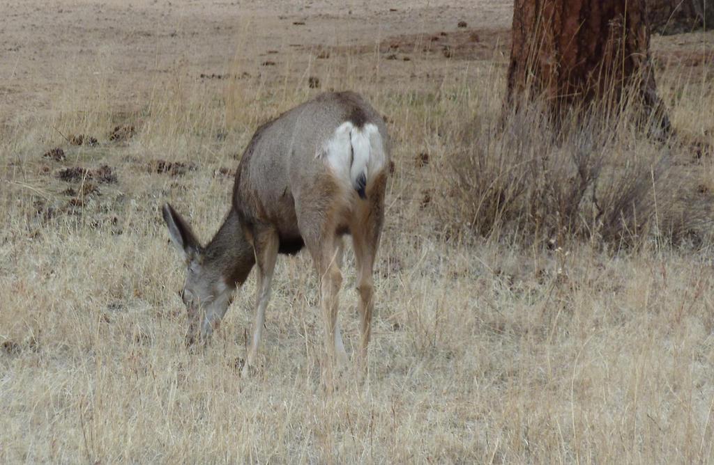 Mule Deer Butt by IckyDog on deviantART