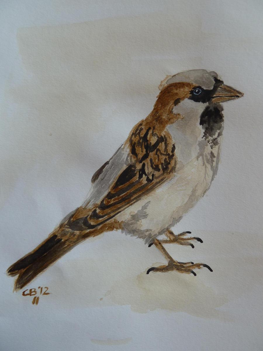 Coffee Sparrow by IckyDog