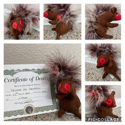 Triumph the Zombie Squirrel