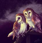 Trade - Barn Owls