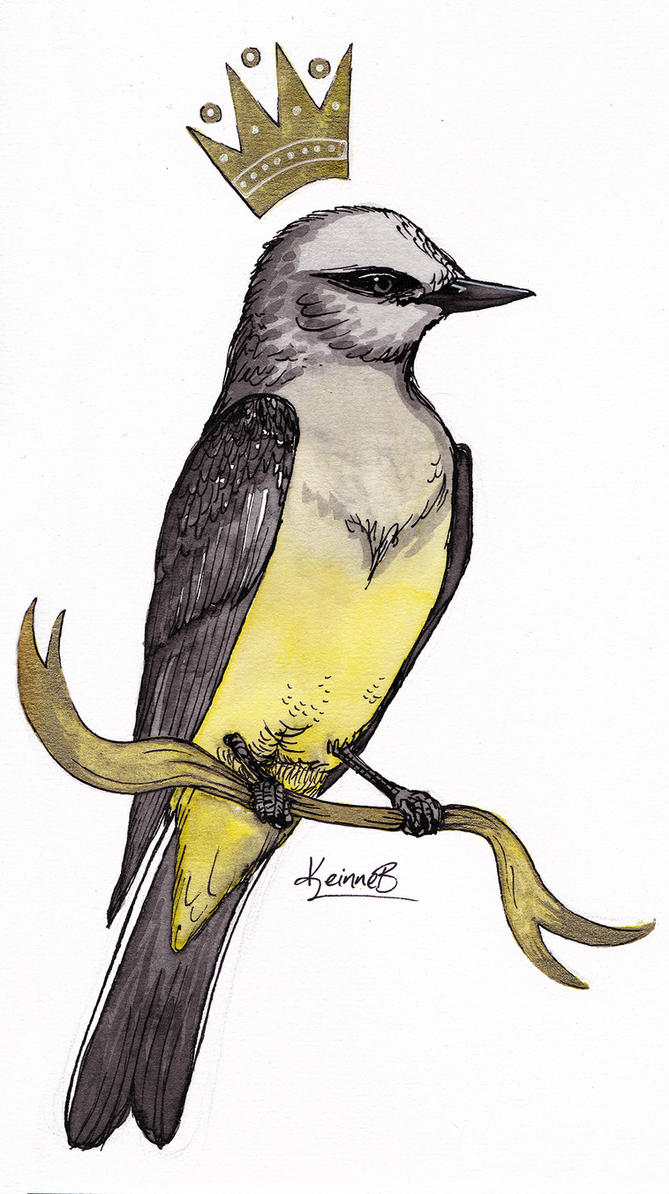 Kingbird by keinneb
