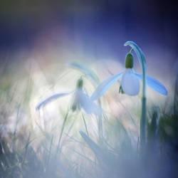 Springs awakening ... by MartaC