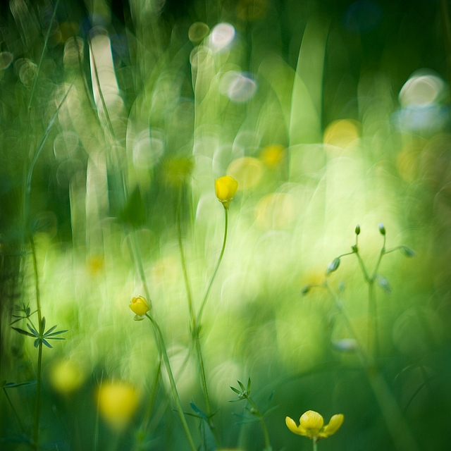 Dreams in the Grass... by MartaC