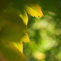 Autumn already sees... by MartaC