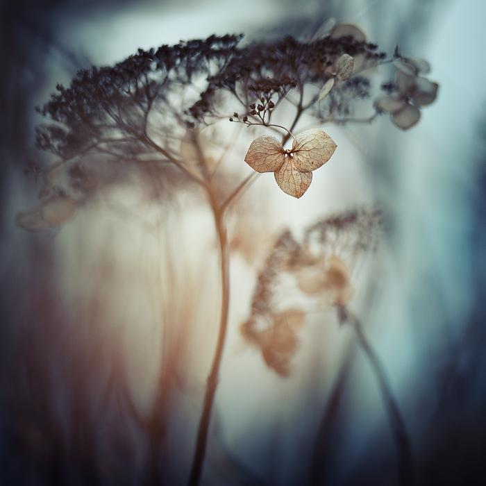 Melancholy... by MartaC