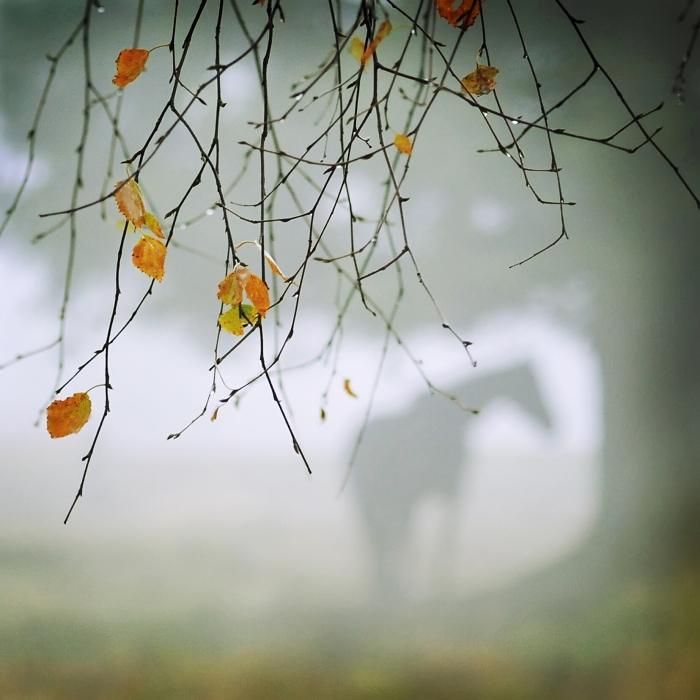 Forgotten... by MartaC