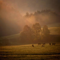 Good morning... by MartaC