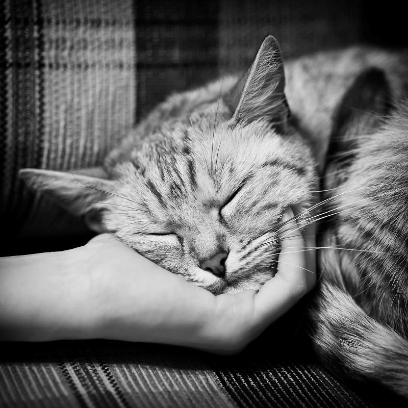 Sleeper... by MartaC