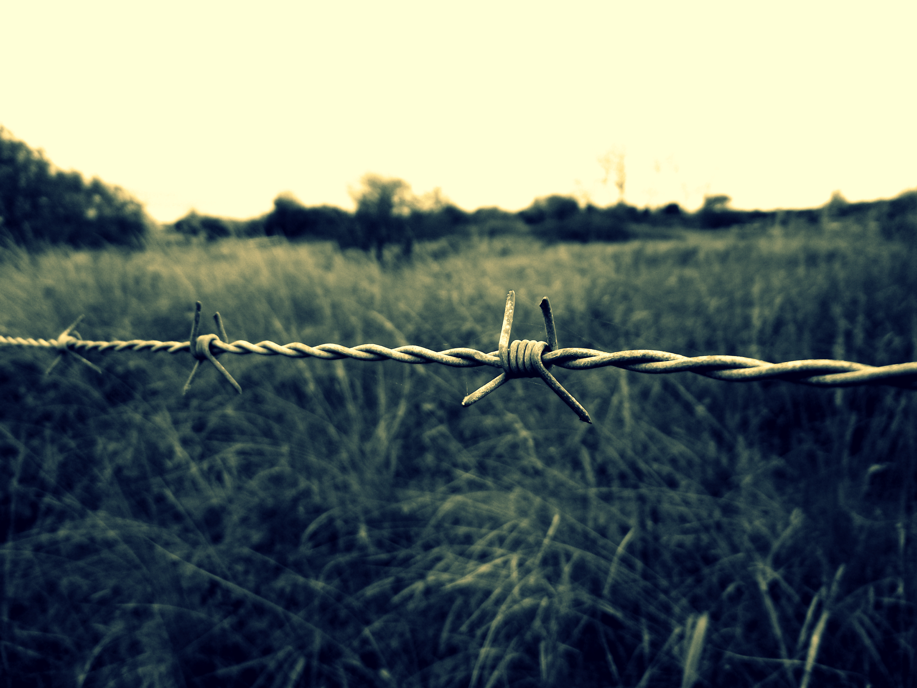 Barbwire by Bouwland