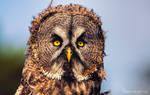 Here is Mr. Grumpy owl again