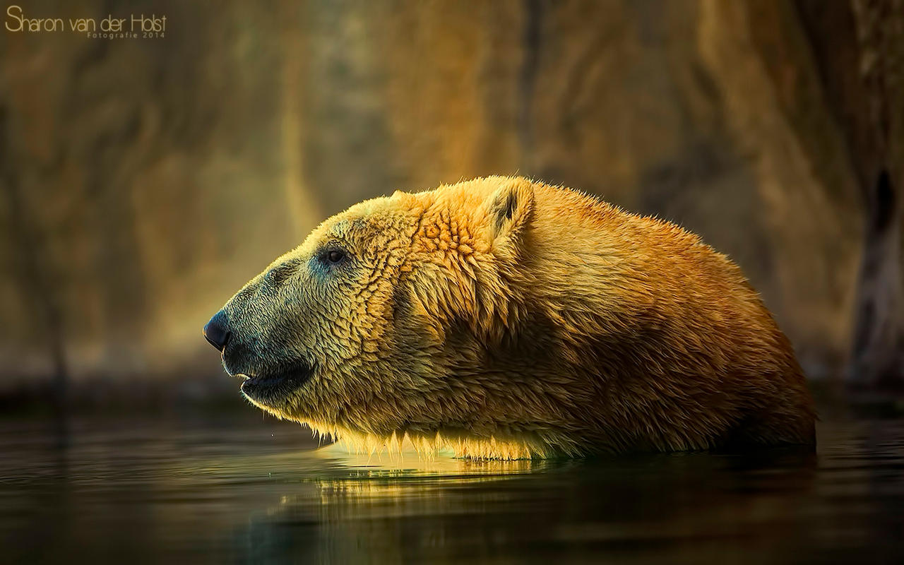 Polar Bear by SvanderHolst