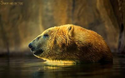 Polar Bear by SvanderHolst