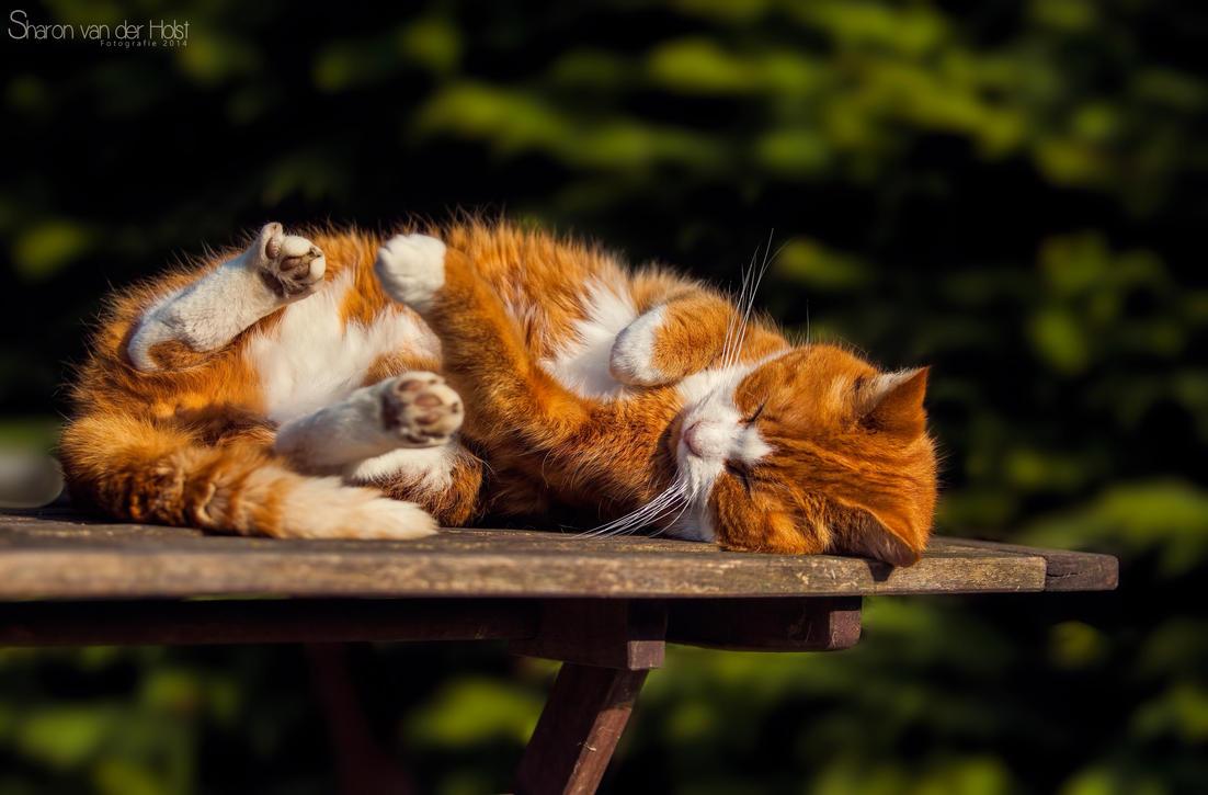 Relaxing by SvanderHolst