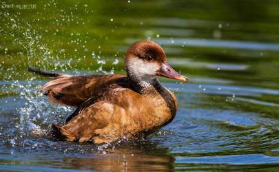 Splashin 'round