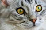 His beautiful eyes