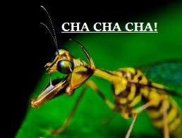 CHA CHA CHA! by kittykittyluv