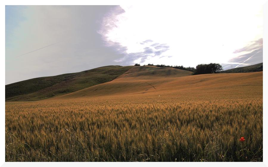 My country XXVII by bellaricca