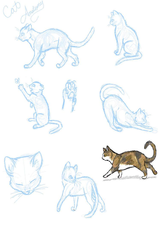 Cat_Anatomy_Practice_____by_SasoriDanna94.jpg