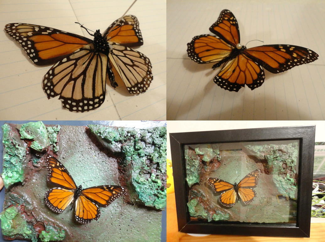 Pinned Butterfly Project by No-44