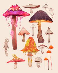 Mushrooms concepts