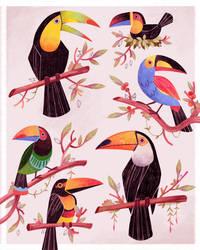 Toucan sketches