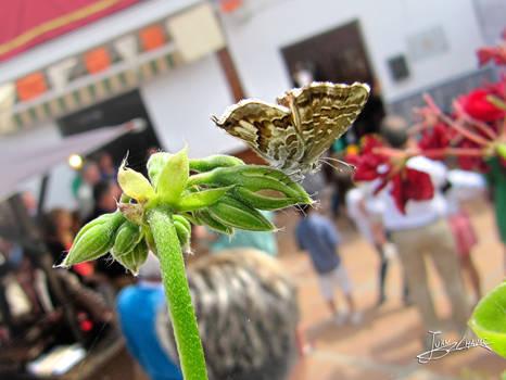 mariposa de Paso