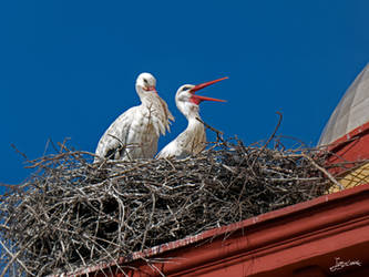 the nest of the storks on the bell tower by JuanChaves