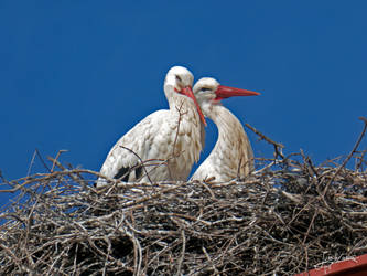 the nest of the storks on the bell tower II by JuanChaves