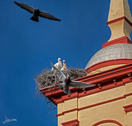 the nest of the storks on the bell tower III by JuanChaves