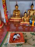 Resting cat in buddhist temple
