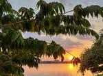 Leafy Mekong sunset