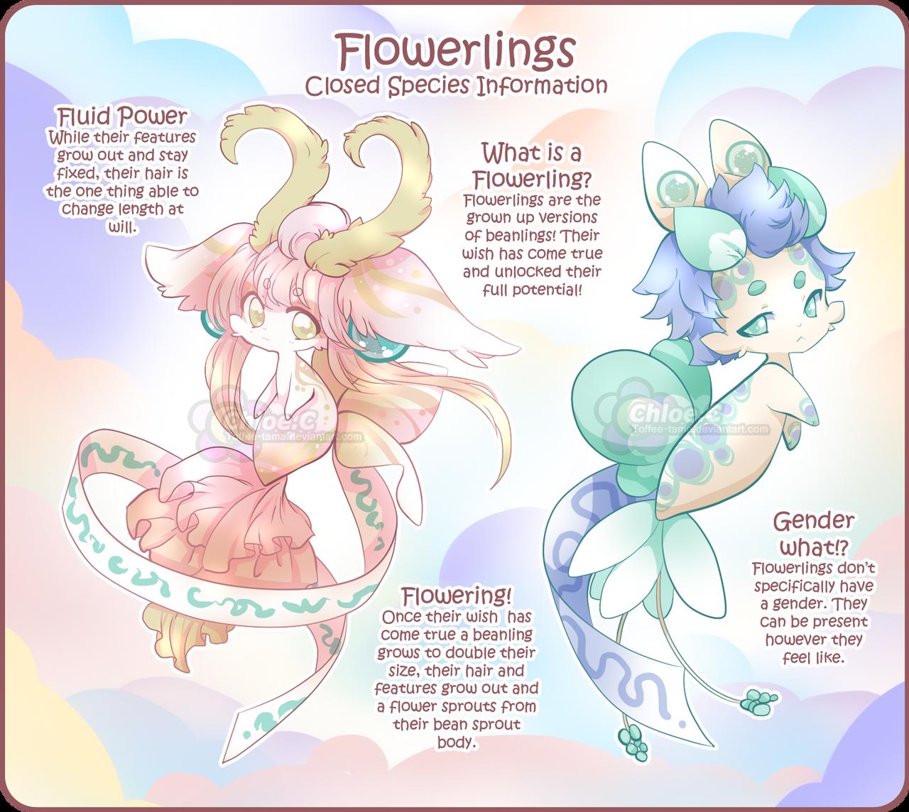 flowerlings_info_by_toffee_tama_ddffb6r-