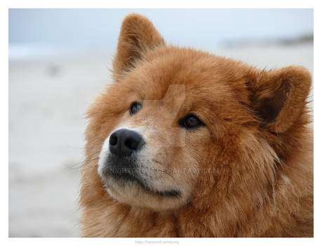 Dog at Sea 4