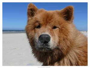 Dog at Sea 6