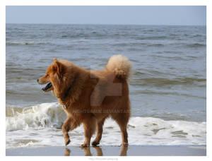 Dog at Sea 7