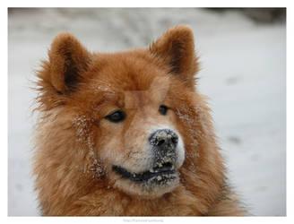 Dog at Sea 11