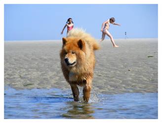 Dog at Sea 12