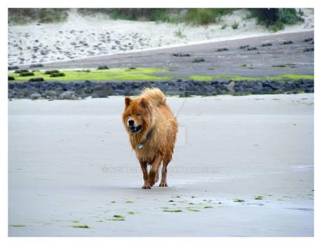 Dog at Sea 13