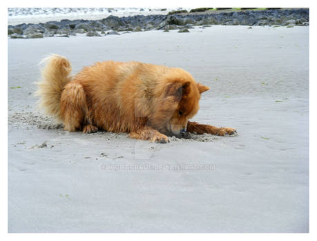 Dog at Sea 15