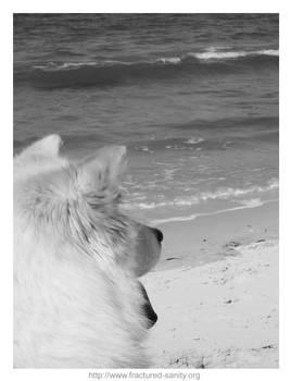 Dog at Sea 1