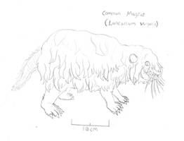 The Common Magrat by Imperator-Zor