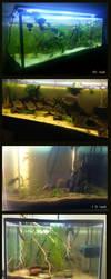 FishTank by Katie-Grace