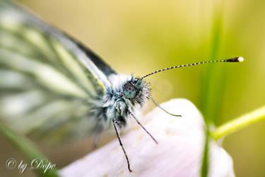 Butterfly by Kaosmaus
