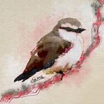 Daydreaming Bird