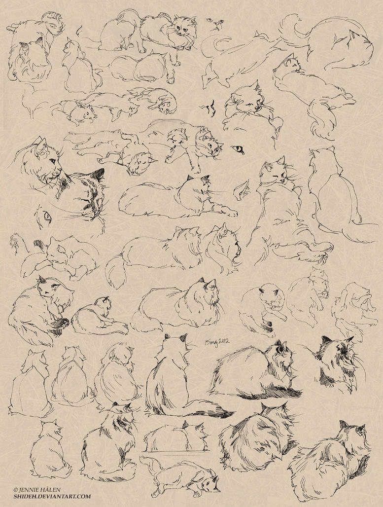 cat sketches by shideh on deviantart